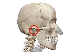 顎関節.png