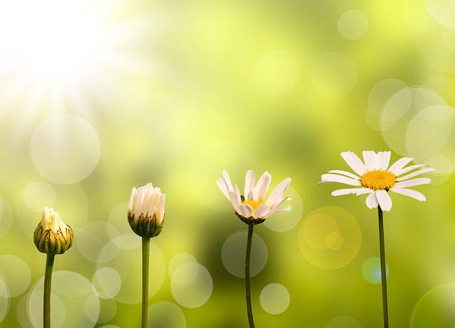 daisies_growing_kpjnzb.jpg