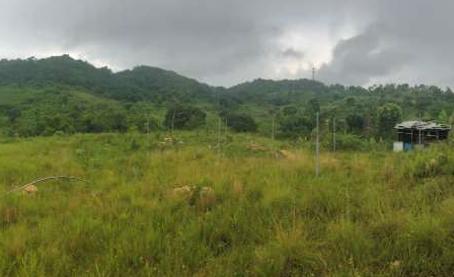 Jamaica Agriculture Site Visit