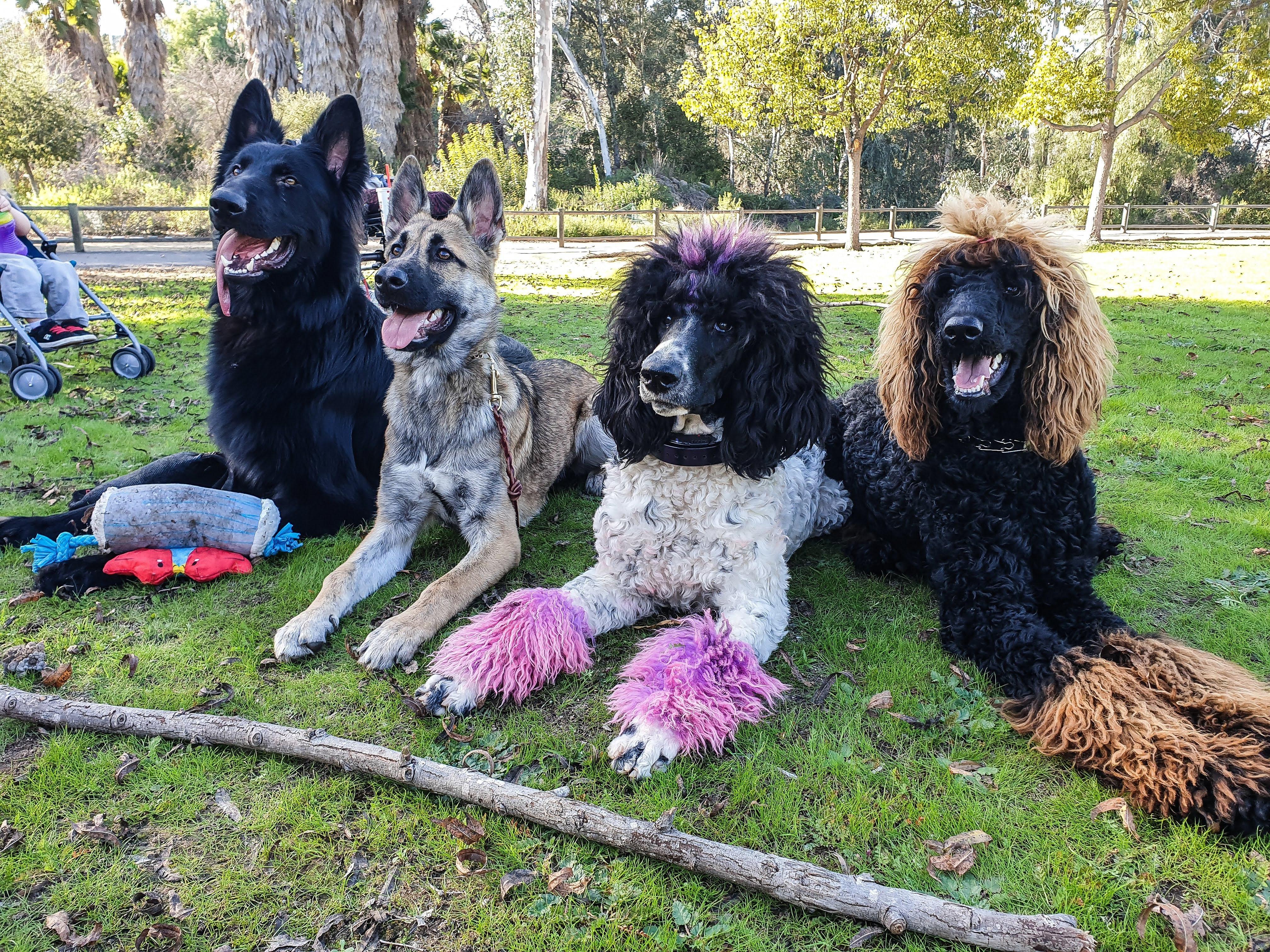Service Dog Training (PA)