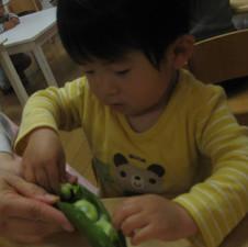 ①デイリー4野菜・生き物の観察.JPG