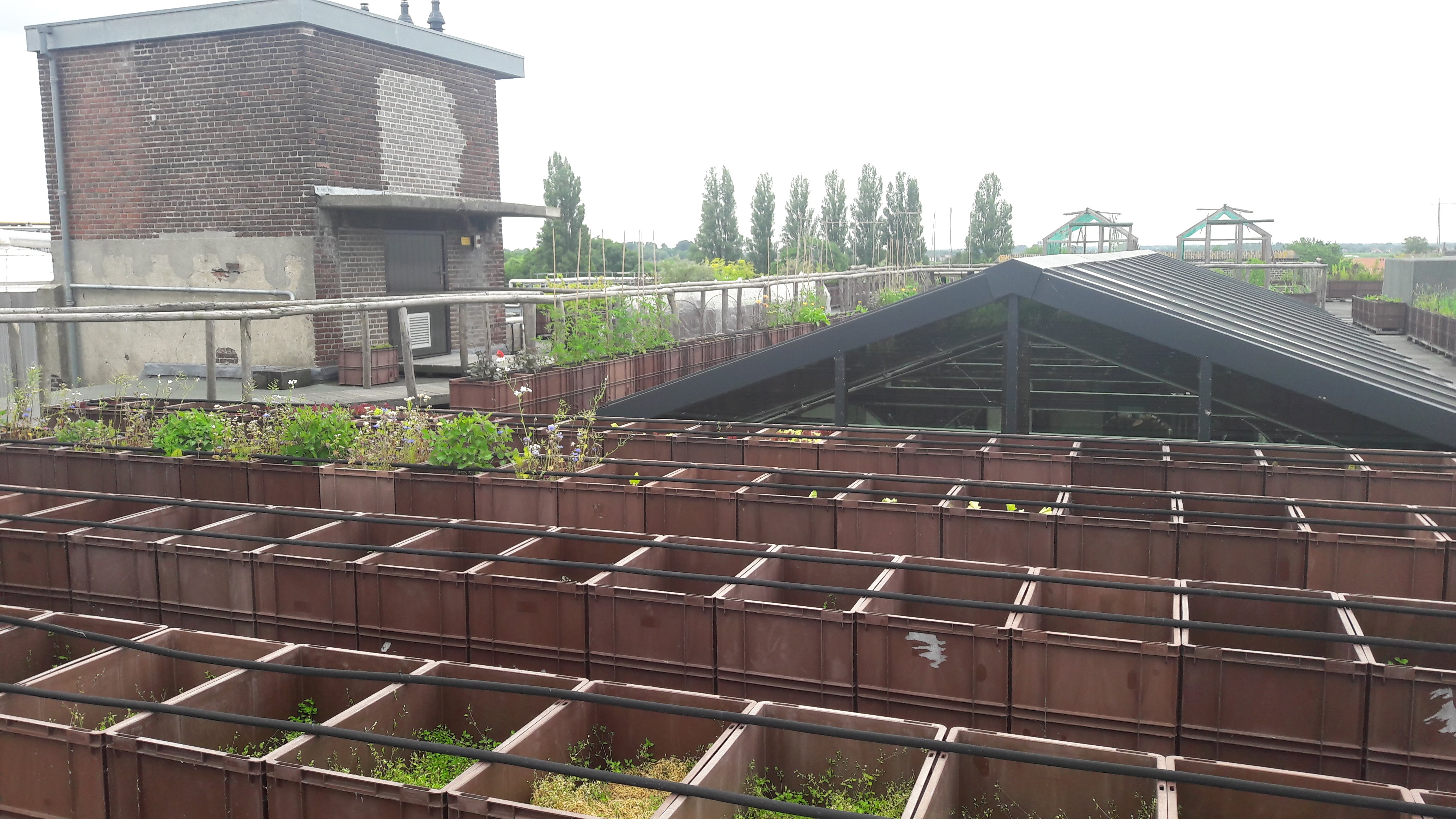 New_initiative_for_green_roof