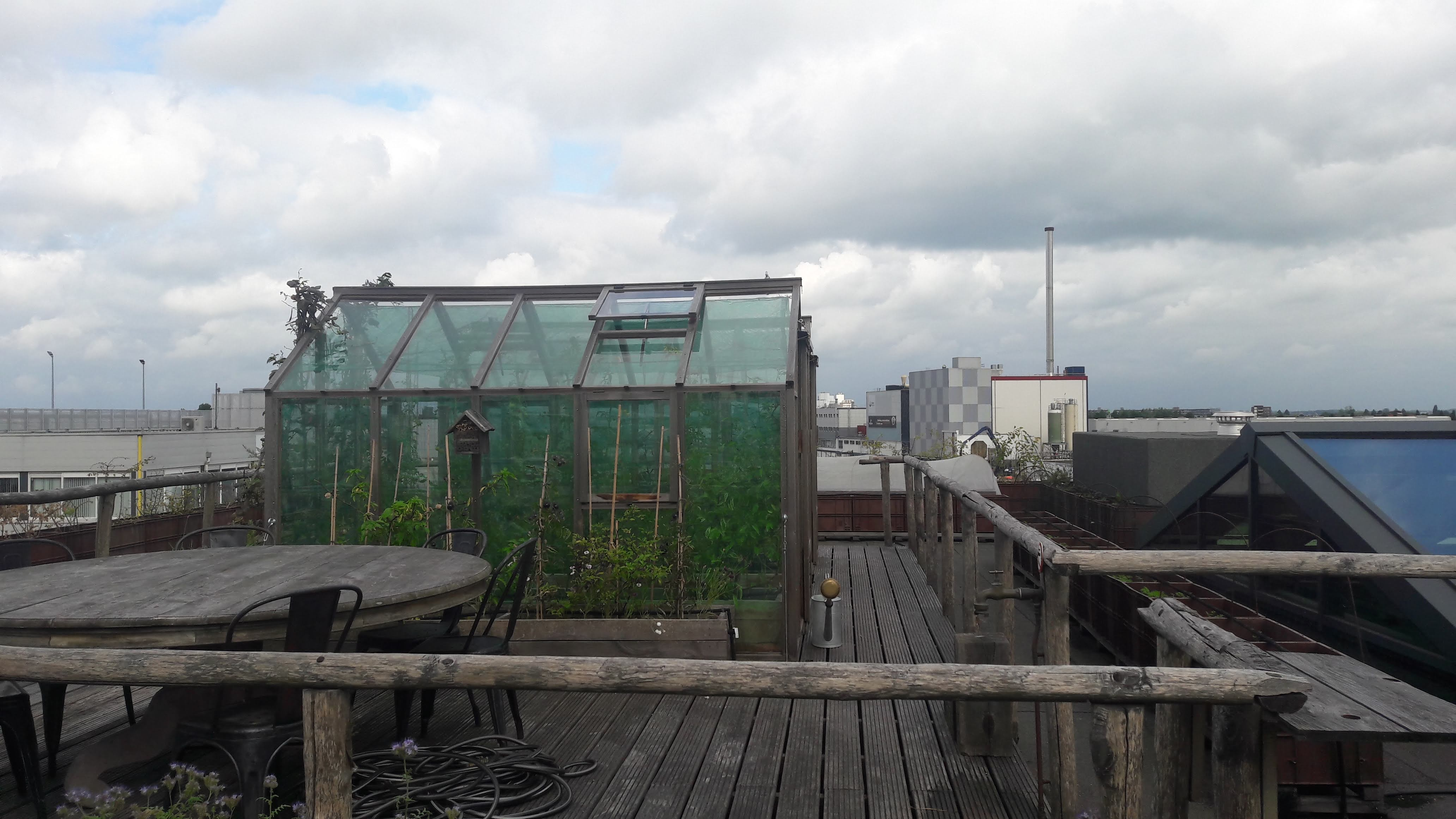 small_greenhouse_for_special_tomato