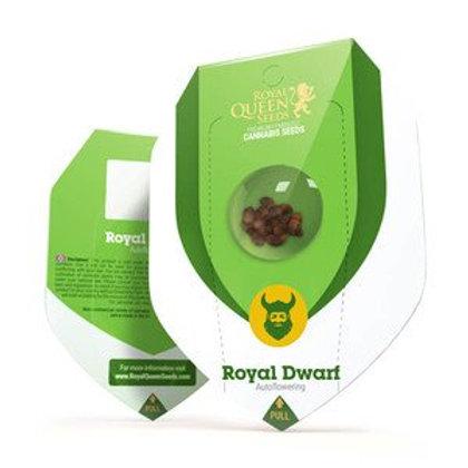 Royal Dwarf Automatic