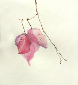 Water Color on Arche Paper