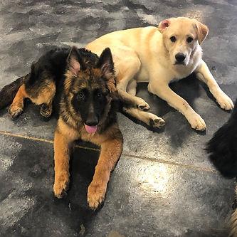 Social Puppies Website.jpg