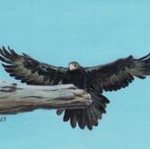 'Eagle Landing'