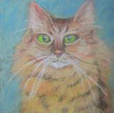 'My Cat 1'