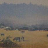 'Mountain Mist, Merrijig'