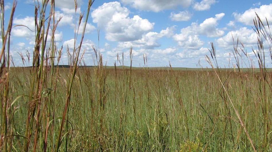 Prairies of Kansas, Kansas Birthday Rockhill Real Estate Group