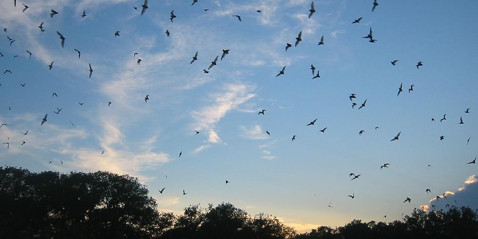 Vuelo virtual de murciélagos desde la reserva de la cueva Bracken