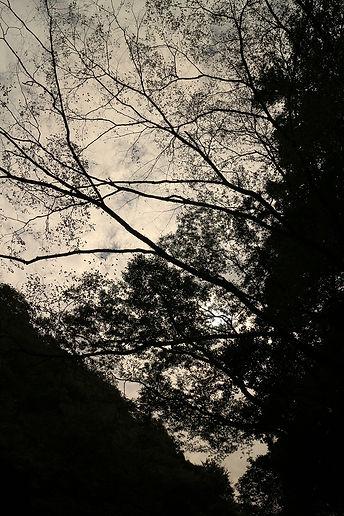 koizumi660.jpg