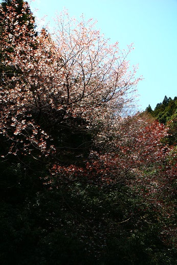 koizumi640.jpg