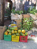 haiti market marketplace produce environment fruits tree angels