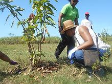 Tree Angels Haiti planters service work planting gardening environment