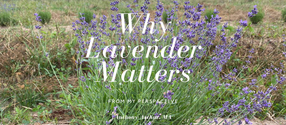 Why Lavender Matters- From My Perspective