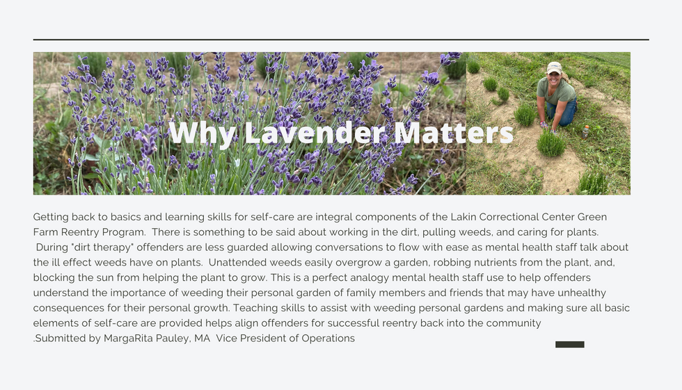 Why Lavender Matters