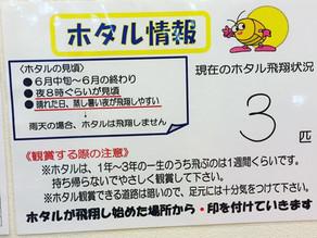 【ほたる情報】