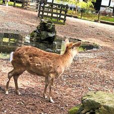 鹿さんに遭遇。