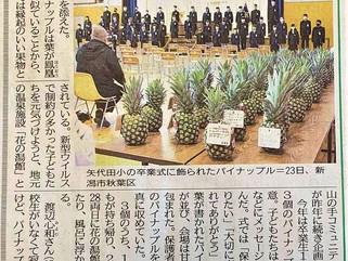 2021年3月24日号掲載 新潟日報 「パイナップル風呂」