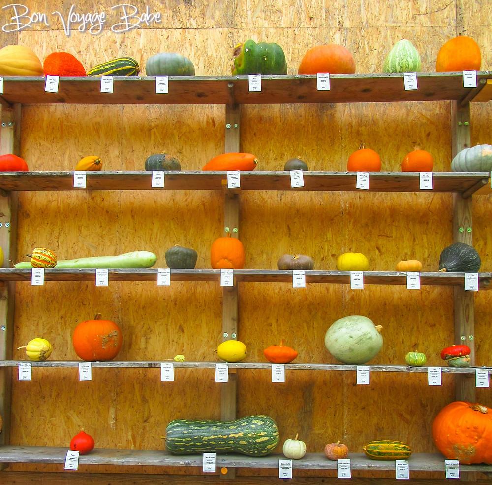 Ludwigsburg Pumpkin Fest Germany