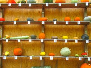 Kurbis curiosities: Ludwigsburg Pumpkin Fest