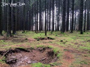 Bastogne Battlefields: Annual Battle of the Bulge Walk
