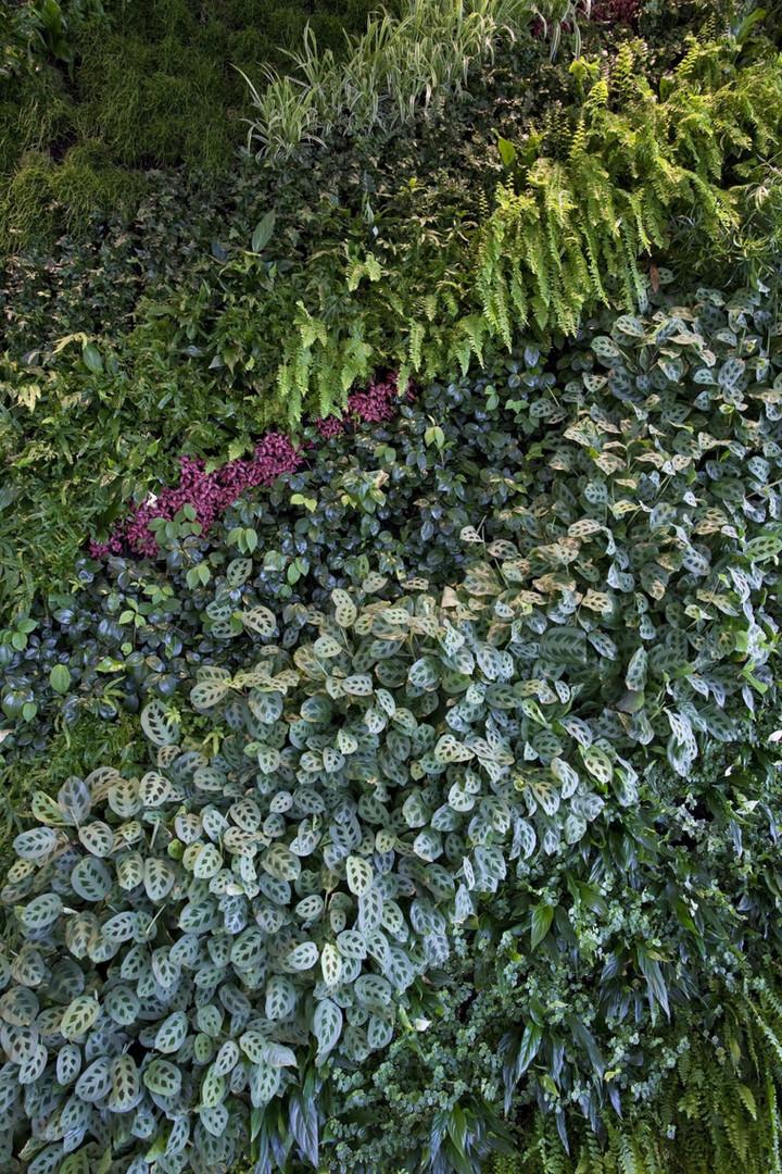 Rizon Meet&Greet Vertical Garden