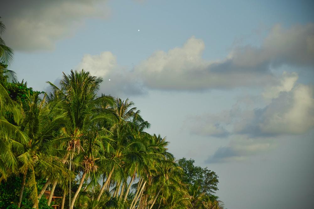 Koh Phangan Palms