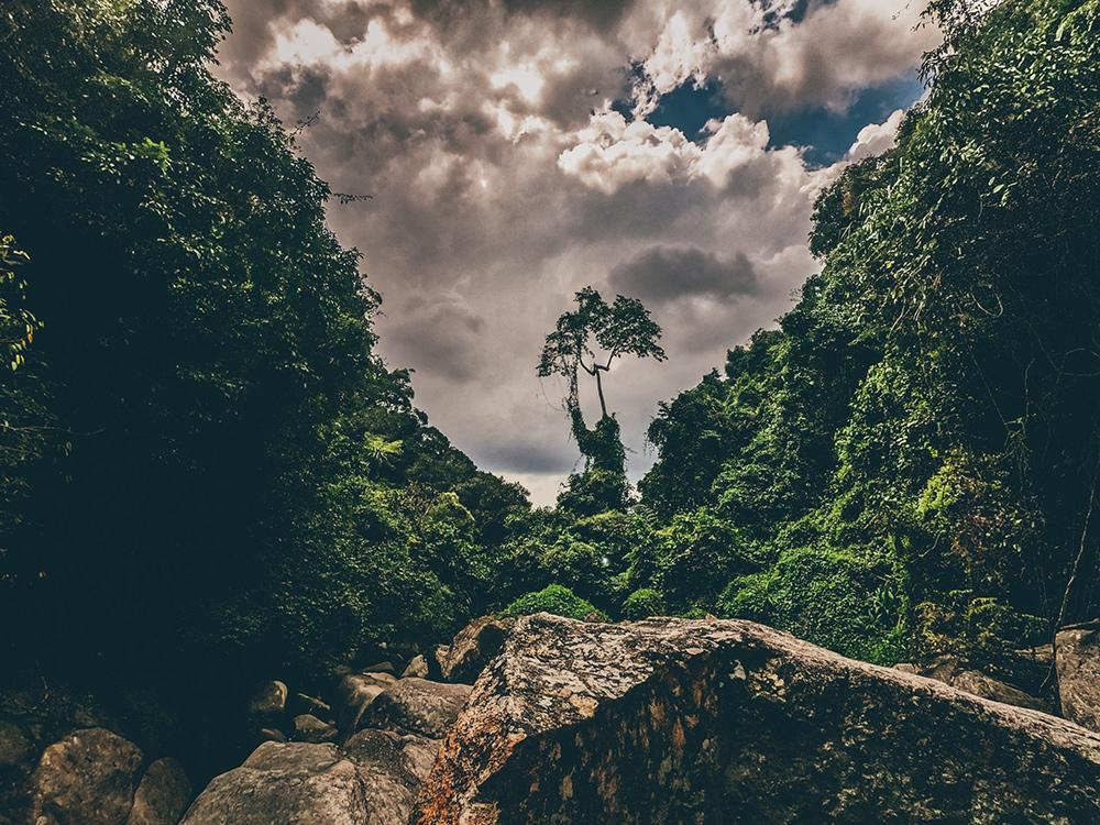 Koh Samui Waterfall jungle