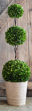 "40"" Preserved Boxwood 3 Ball Topiary"