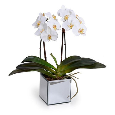 "20"" Premium Faux Phalaenopsis Orchid in Mirror Pot"