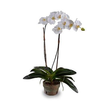 "30"" Premium Faux Phalaenopsis Orchid in Terracotta Pot"
