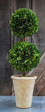 """20"""" Double Ball Preserved Boxwood Topiary"""