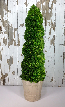 """43"""" Preserved Boxwood Spiral Topiary"""
