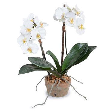 "18"" Premium Faux Phalaenopsis Orchid in Terracotta Pot"