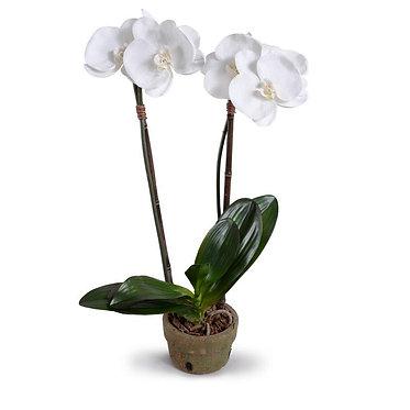 "22"" Premium Faux Phalaenopsis Orchid in Terracotta Pot"