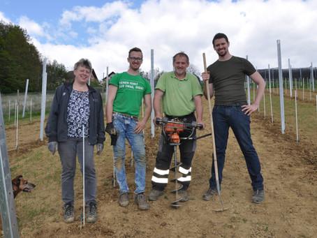 Ein Weingarten entsteht - Neuanlage 2019