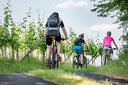 Radfahren_Weingarten_Steiermark.jpg
