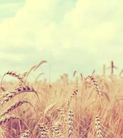 Evant Feed & Fertilizer