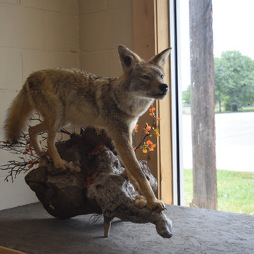 Crosshairs Taxidermy