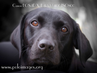 Tips for photographing graphing black dogs...plus WIN a Photoshoot!
