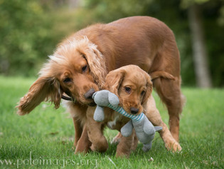 Photographing puppies!!!
