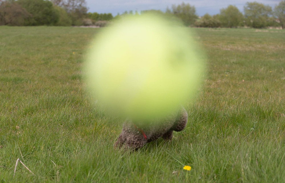 photographing a tennis ball (and a dog)!