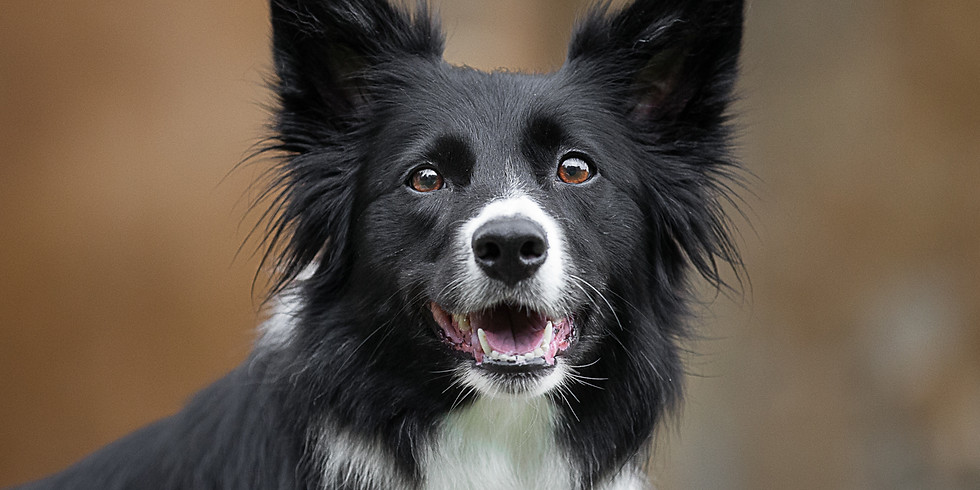 Top tips for photographing your dog!
