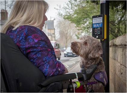 https://www.dogphotographeroftheyear.org.uk/2019-Winners-Gallery/Assistance-Dogs-charity/i-DQ7x3kx/A