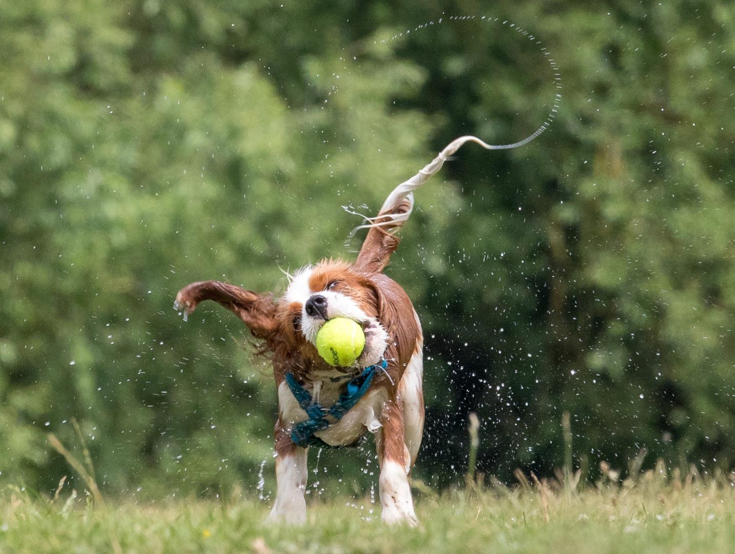 Teddy Doggy Shake.jpg