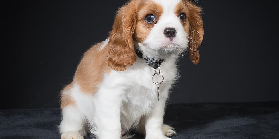 Pop-up Dog Photography Studio at The Duke of Wellington, Sunday 25th November
