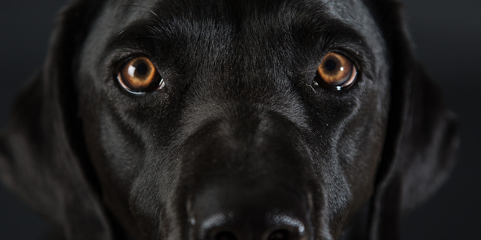 Pop-up Dog Photography Studio at The Boat Inn, Saturday 9th February