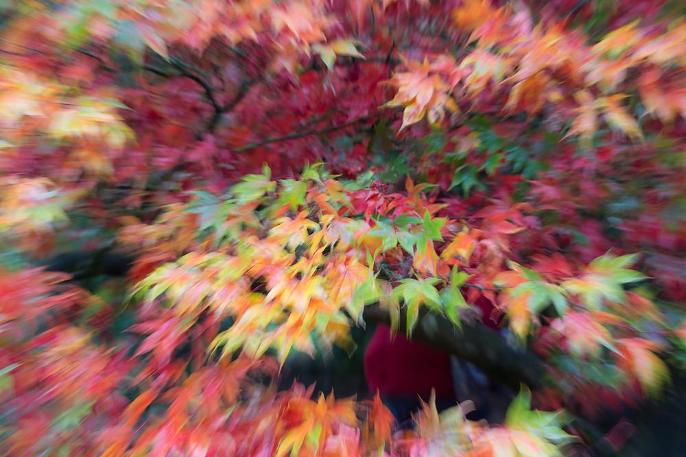 Autumn colours zoom effect